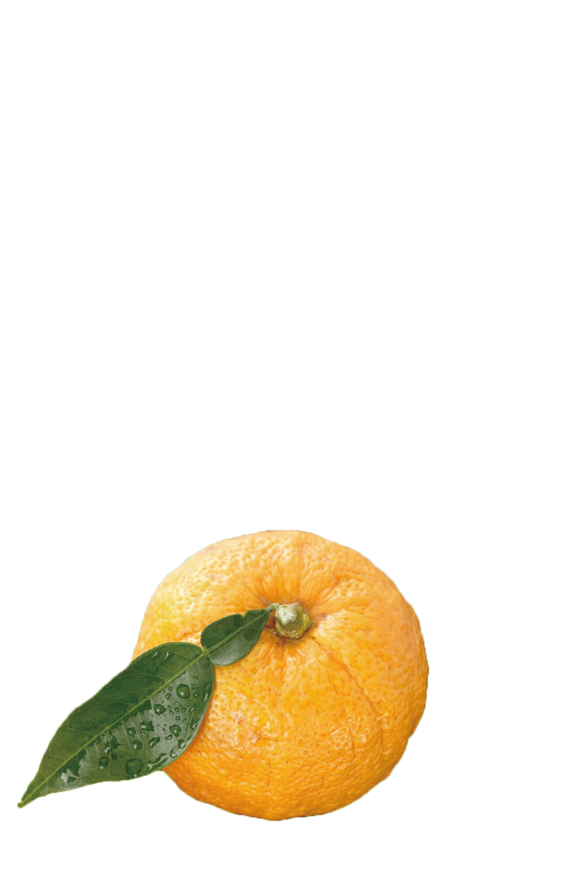 top-yuzu